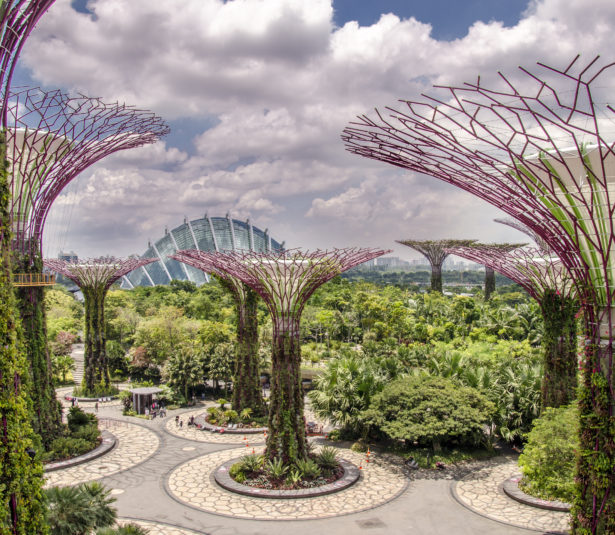 view of the supertree at the garden by the bay. sngapore. asia. future. environment.